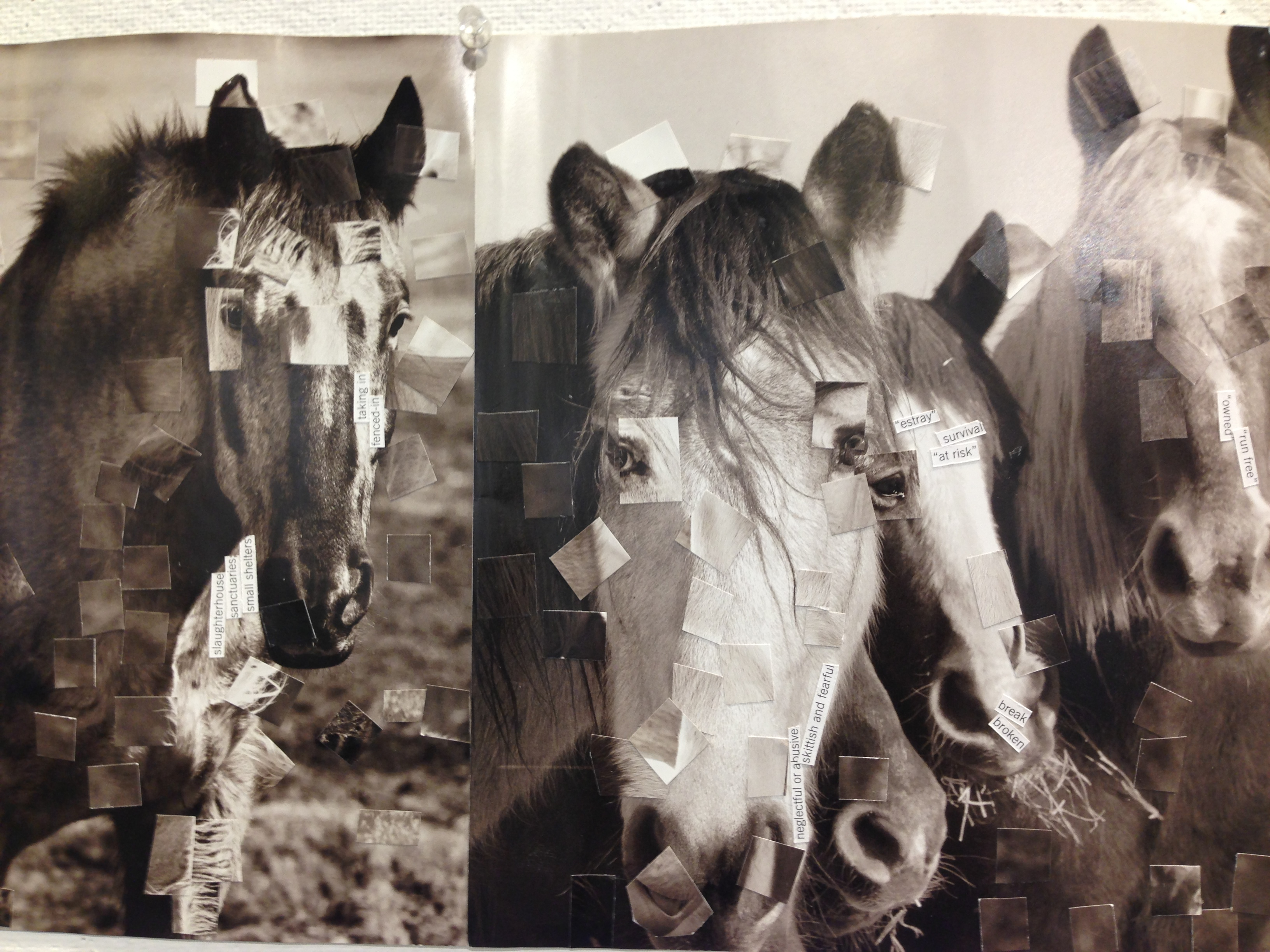 Book Alteration Project Wild Horses Endangered Beauty Bai